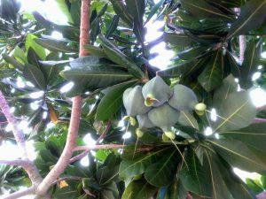 Mangrov Asoset