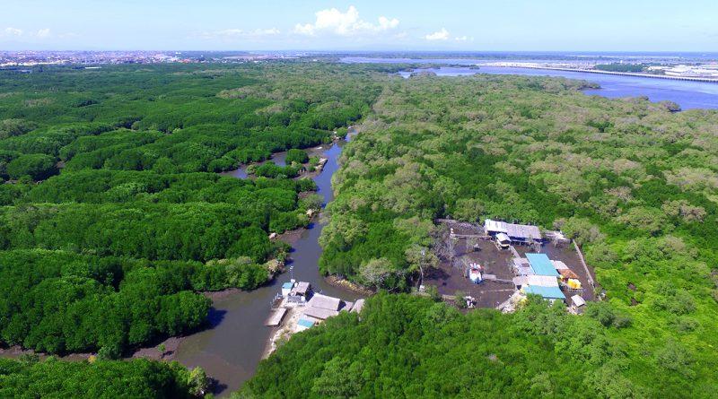 Meluruskan Istilah Hutan Mangrove Bukan Hutan Bakau Parangtritis
