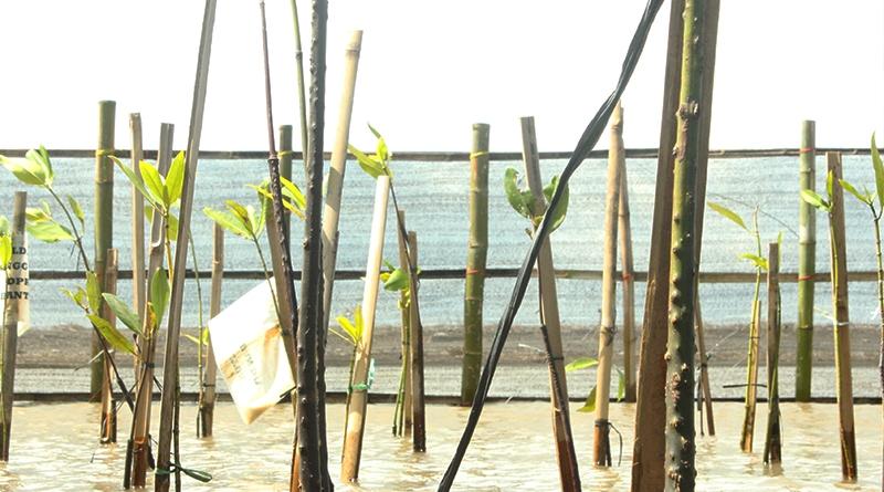 4 - Pemulihan Ekosistem untuk Minimalisasi Bencana Pesisir