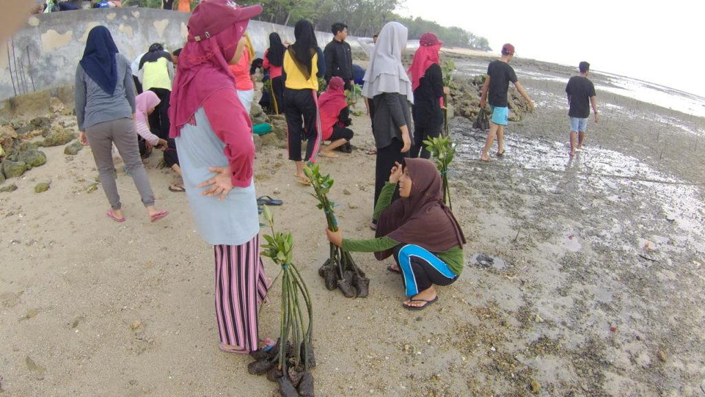 Proses Penanaman mangrove ada beberapa tahapan