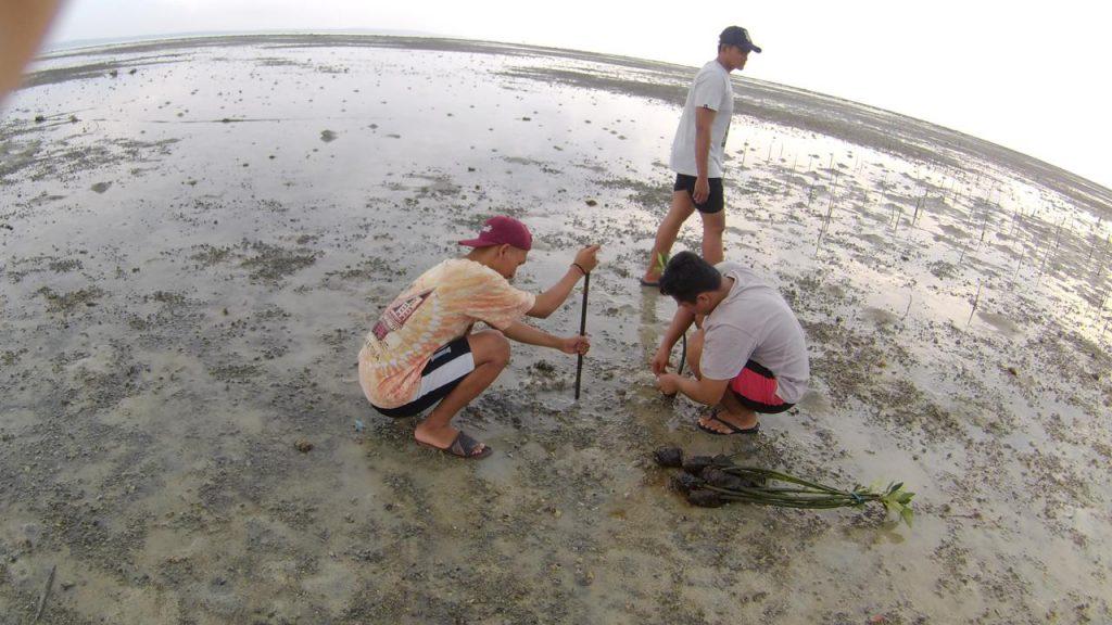 Jarak Antar Mangrove Sekitar 1 meter