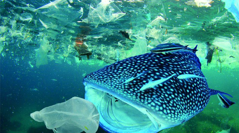 Ikan Paus Memakan Sampah Plastik di Lautan