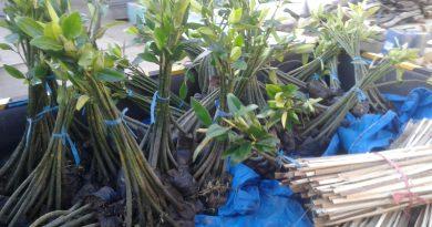 Ekosistem mangrove merupakan suatu ekosistem yang rentan akan kerusakan