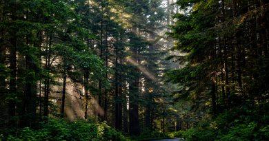 Hutan memberikan banyak pengaruh terhadap kehidupan makhluk hidup
