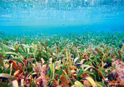 Ekosistem lamun yang terletak di wilayah kepesisiran